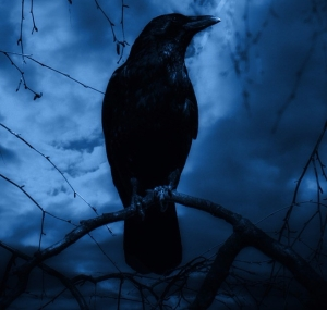 raven-2527145_1280